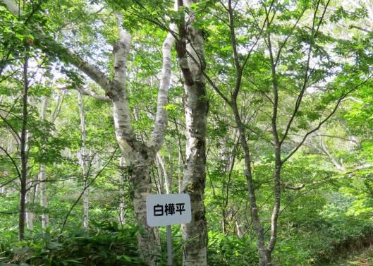 オダッシュ山 2015-08-30 002