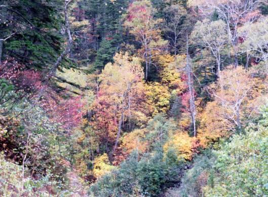 北日高岳 2015-09-30 010