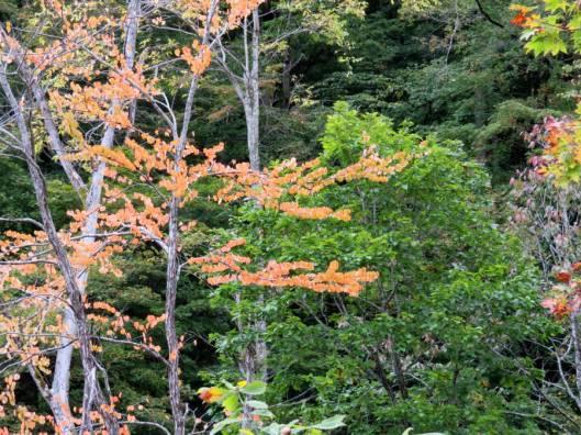 北日高岳 2015-09-30 014