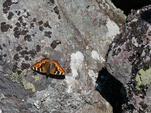 岩石山A 2015-10-06 004