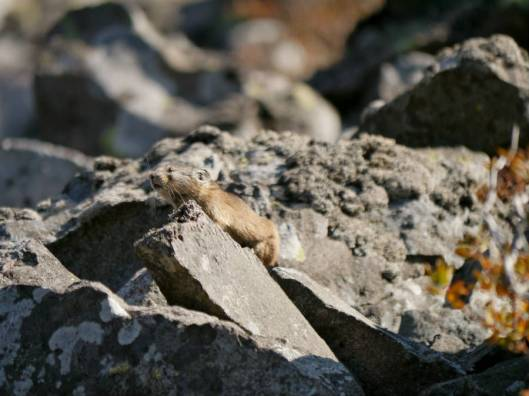 岩石山A 2015-10-06 019