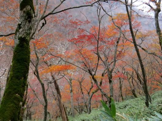 楽古岳 2015-10-18 022