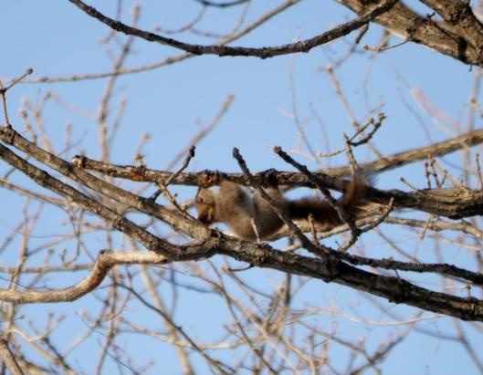 2016-01-24 2016-1-24 モニ1000鳥調査 034
