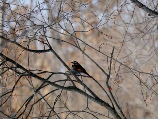 2016-01-24 2016-1-24 モニ1000鳥調査 072